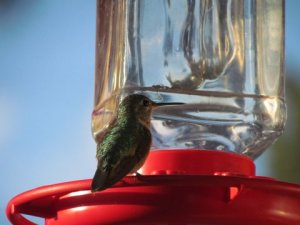 Wordless Wednesday: A Little Bird Watching