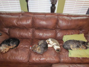 Wordless Wednesday: Beautiful Shelter Dogs/Cats
