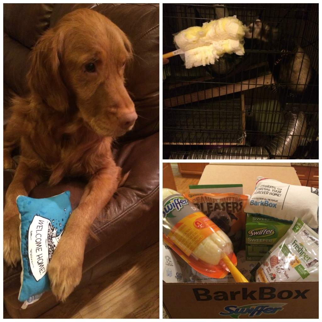 Swiffer Bark Box #ShedHappens