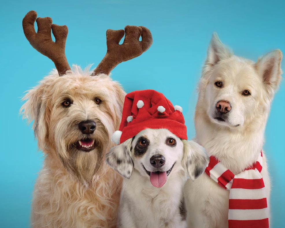 Cute pups #Treatsforall